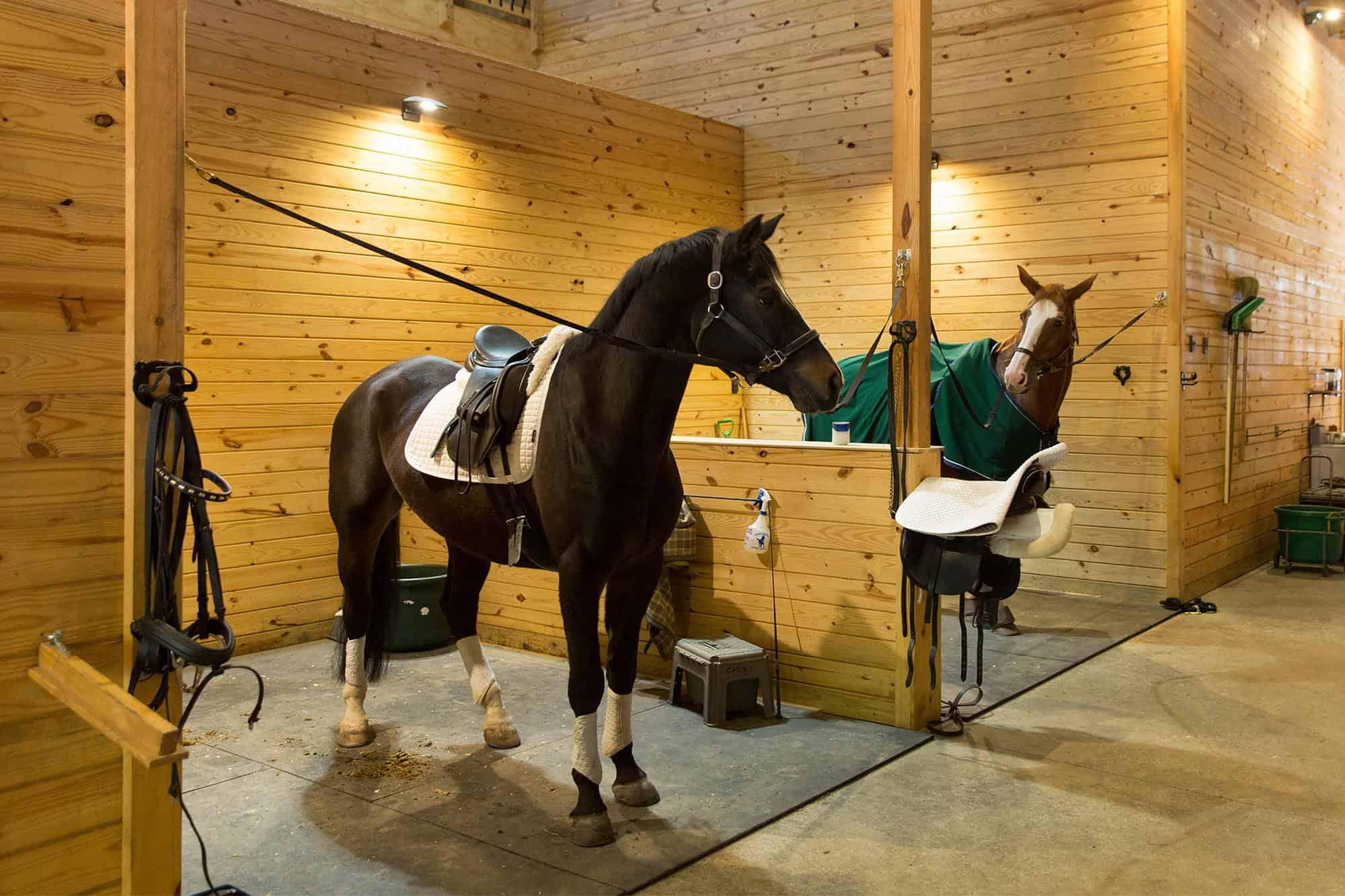 horse stalls saddle