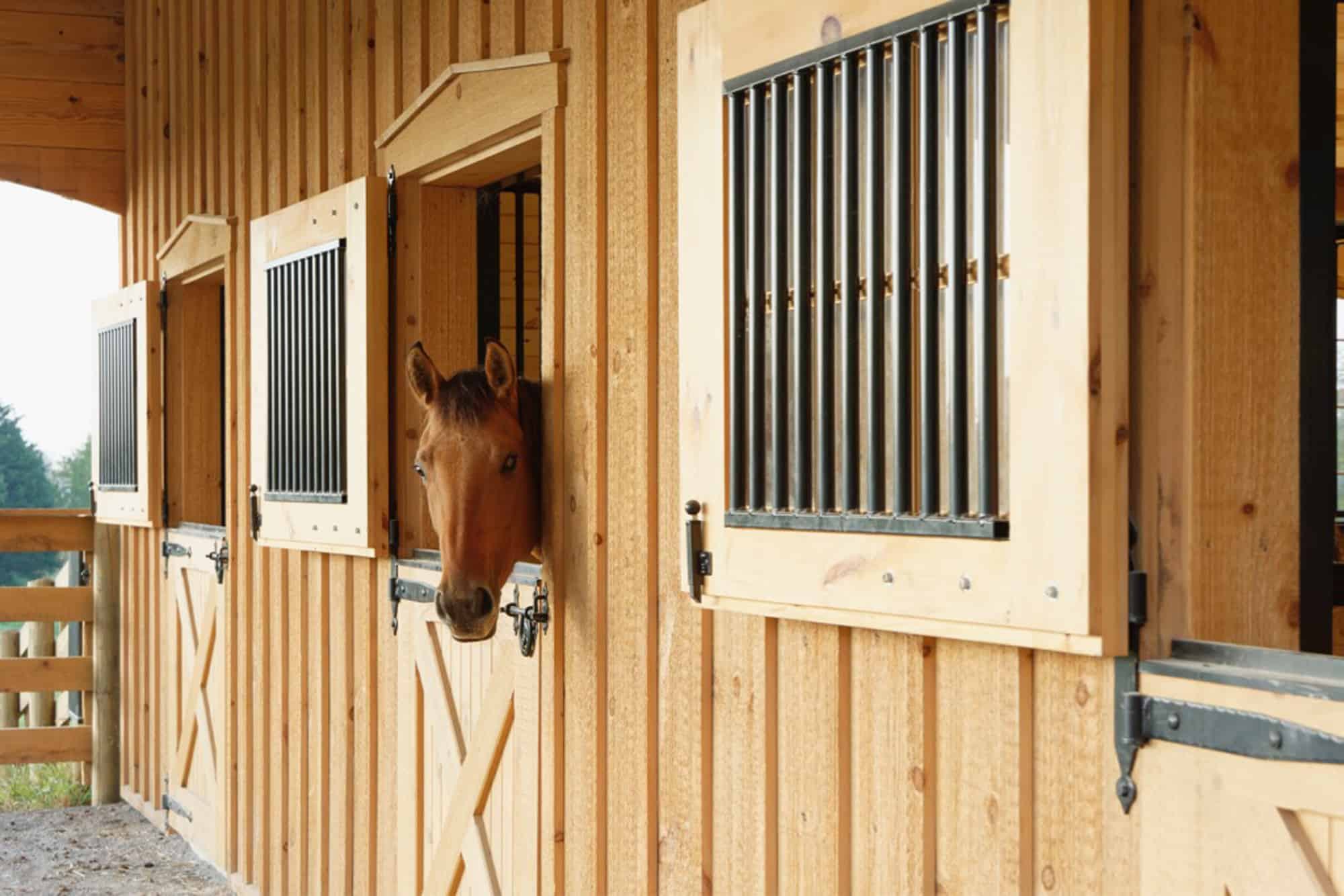 horse stalls dutch doors lean to