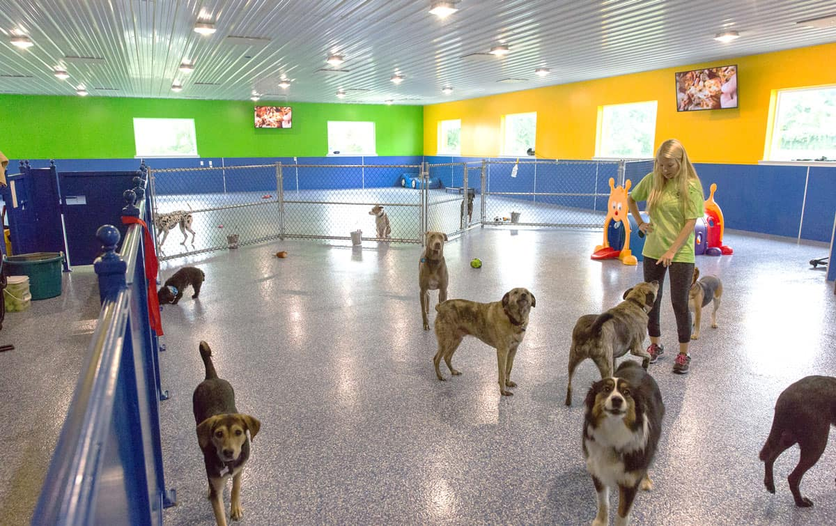 pet spa dog daycare bright colors