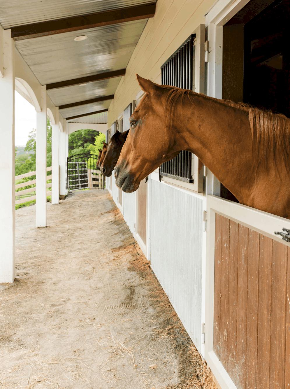 horse stalls dutch doors